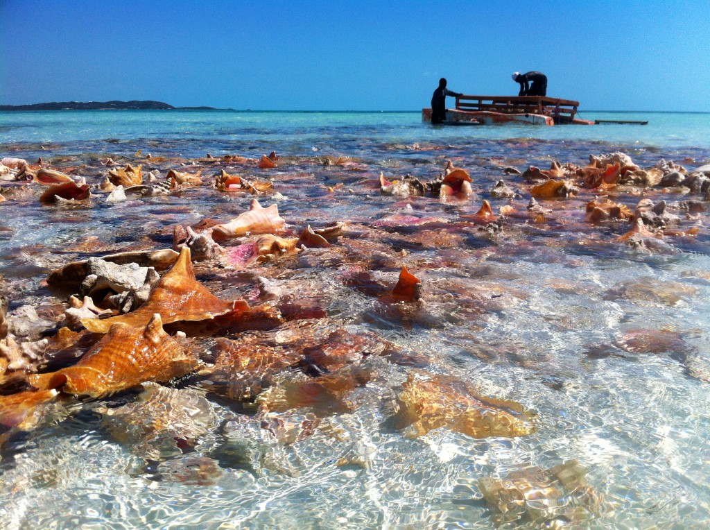 IMG_9148_conch